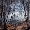 031521 JEH brushfire 13