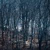 031521 JEH brushfire 06