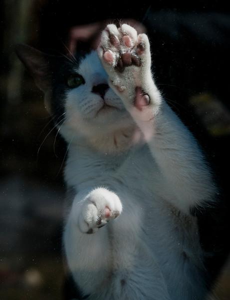 STANDALONE 3 19 21 Peabody Bean the cat 1