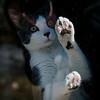 STANDALONE 3 19 21 Peabody Bean the cat