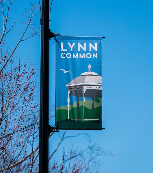3 27 20 Lynn Common evergreen 5