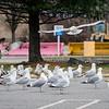 3 28 20 Peabody Seagull standalone