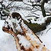Lynn030419-Owen-strom stand alone01