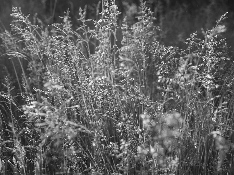 struer_2021-06-09_201219