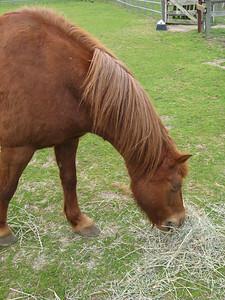 006_pt_reyes_ponies