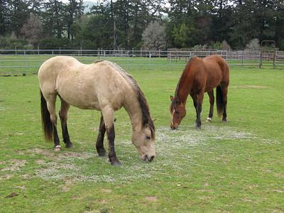 002_pt_reyes_ponies