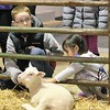 Kristi Garabrandt - The News-Herald<br /> Ava Kwok, 4, University Heights, and Carter Douglas, 12, Willoughby pet one of the farmparks newest babies.