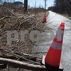 dnews_0307_Cut_Trees_03