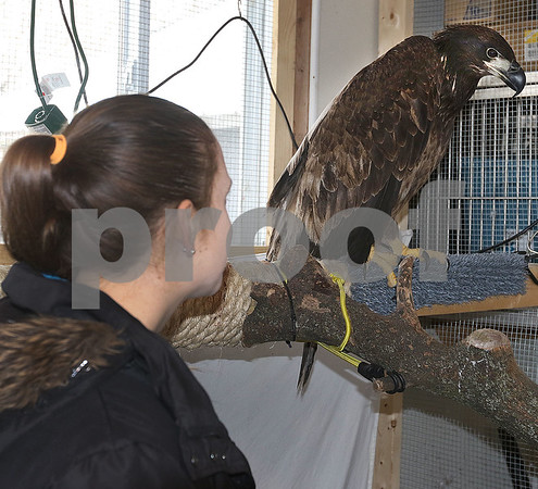dc.031718.injured.eagle01