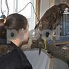 dc.031718.injured.eagle01
