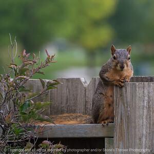 015-squirrel-ankeny-27sep18-03x03-006-350-7964