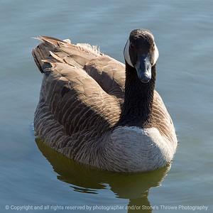 015-goose-ankeny-23apr18-03x03-007-350-4021