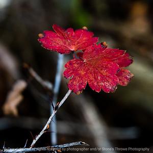 015-leaf-wdsm-02nov18-03x03-006-350-8711