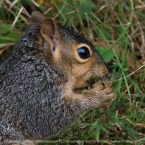 015-squirrel-wdsm-08oct18-03x03-006-350-8168