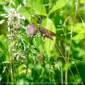 015-butterfly-wdsm-13jun20-03x03-006-400-7048