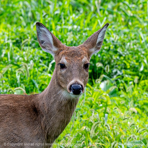 015-deer-wdsm-09oct19-03x03-006-400-4117