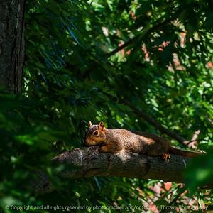 015-squirrel-wdsm-10jun19-03x03-006-350-0909