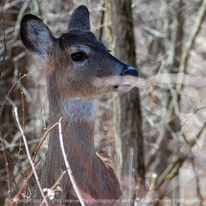 015-deer-wdsm-02apr19-03x03-006-350-9741