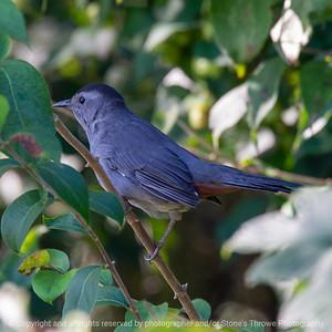 015-bird-wdsm-23sep19-03x03-006-350-3369