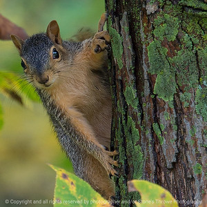 015-squirrel-wdsm-08oct18-03x03-006-350-8081