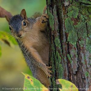 015-squirrel-wdsm-08oct18-03x03-006-350-8081