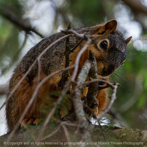 015-squirrel-ankeny-13may19-03x03-006-350-0438