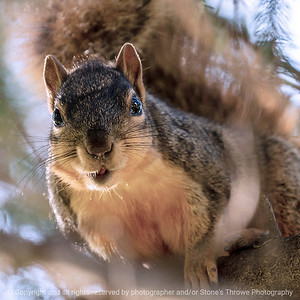 015-squirrel-ankeny-13may19-03x03-006-350-0382