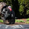 4 17 19 Lynn turkey standalone
