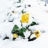 4 18 20 Lynn snow features 1
