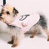 3 28 19 Fashion column dogs 9