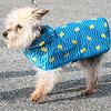 3 28 19 Fashion column dogs 3