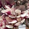 042721 JEH springflowers 01