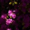042721 JEH springflowers 03