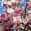 042721 JEH springflowers 02