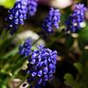 042721 JEH springflowers 04