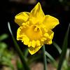 042721 JEH springflowers 05
