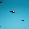 042721 seagulls 01