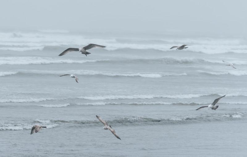 4 3 20 Lynn Shore seagull standalone
