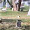funeralstmarycovid406-Falcigno-03