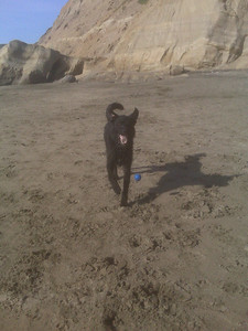 001_lucky_at_ft_funston
