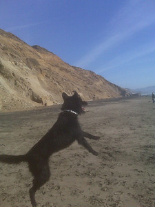 005_lucky_at_ft_funston