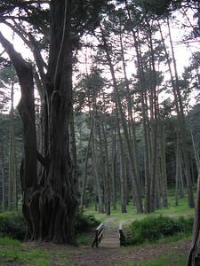 11_old_tree