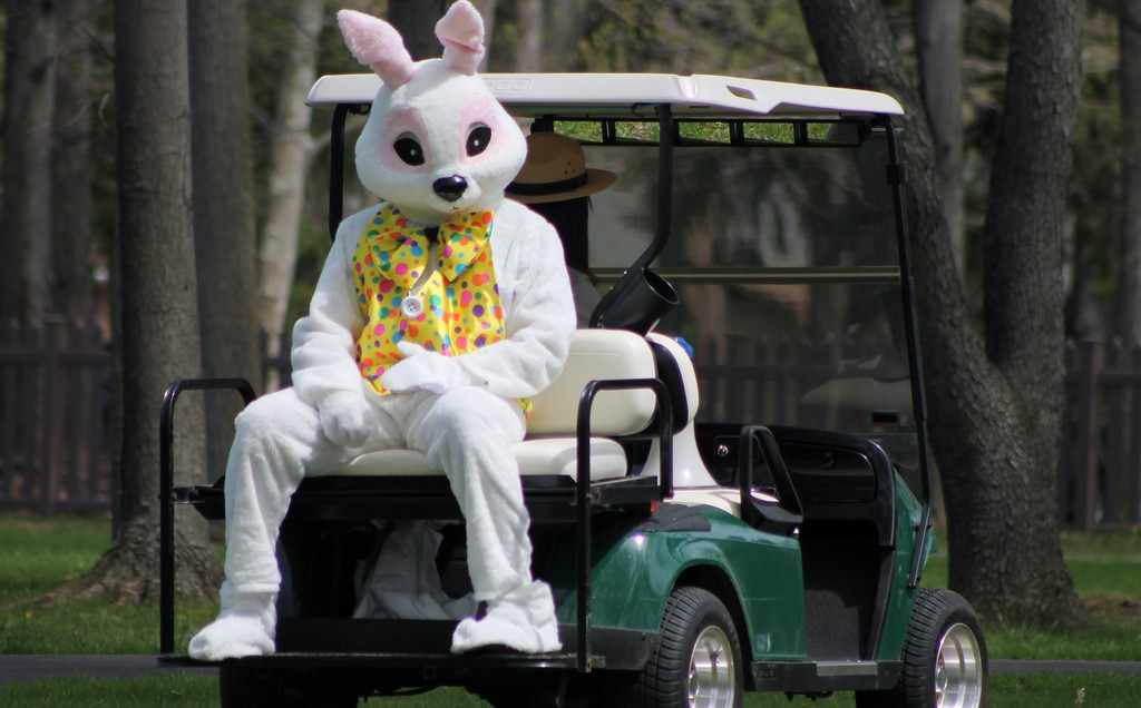 . The Easter Bunny arrives at the James A. Garfield Historic Site for the egg roll on the back of a gold cart. Kristi Garabrandt - The News-Herald