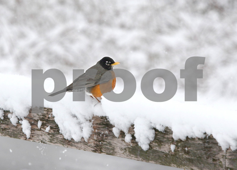 dc.0418.snow07