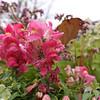 dc.0424.blumen gardens05
