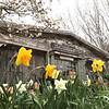 dc.0424.blumen gardens02
