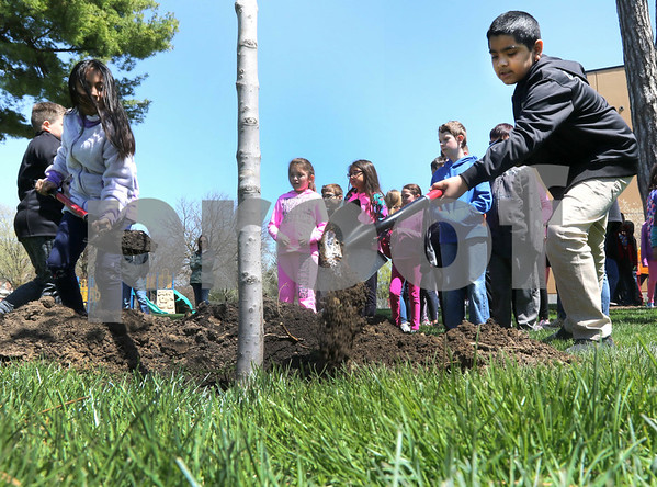 dc.0427.sycamore tree planting04