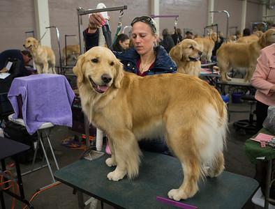 Golden Gate Kennel Club Dog Show