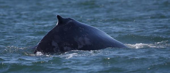 San Francisco Whale Watching tour
