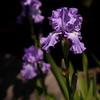 052021 JEH springflowers 01